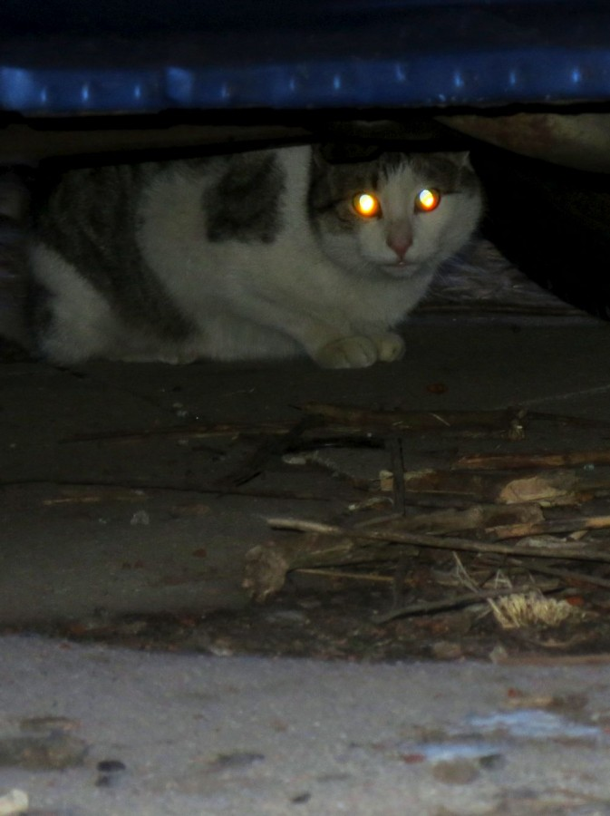 Stray cats find their way to campus, lead to concerns