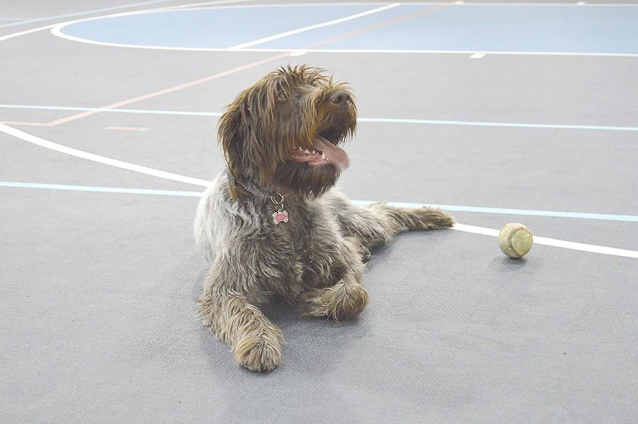 "Libby enjoys playing fetch and a ""goalie"" type game where she trys to keep two balls away from Baum."