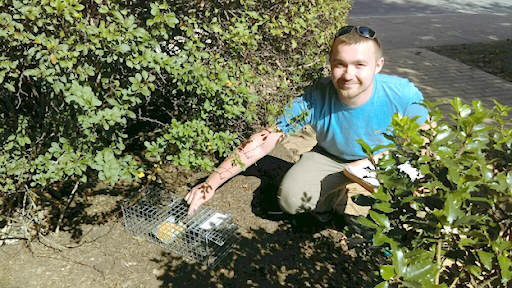 Brzozowski sets up a squirrel trap on campus for the research they did over the summer.